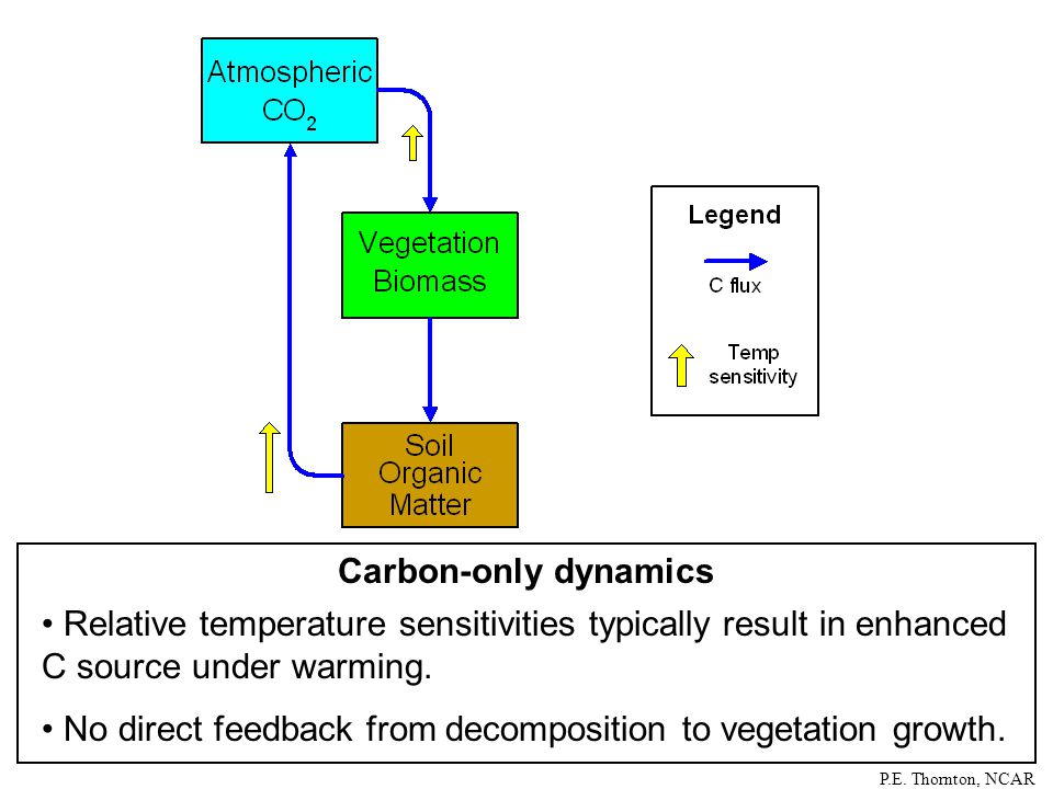 Carbon-only dynamics Relative temperature sensitivities typically result in enhanced C source under warming.