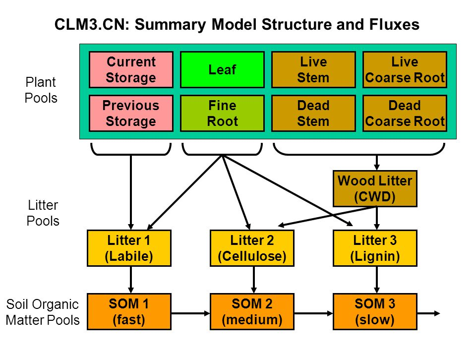 CLM3.CN: Summary Model Structure and Fluxes Leaf Fine Root Dead Stem Dead Coarse Root Live Stem Live Coarse Root Previous Storage Current Storage Wood
