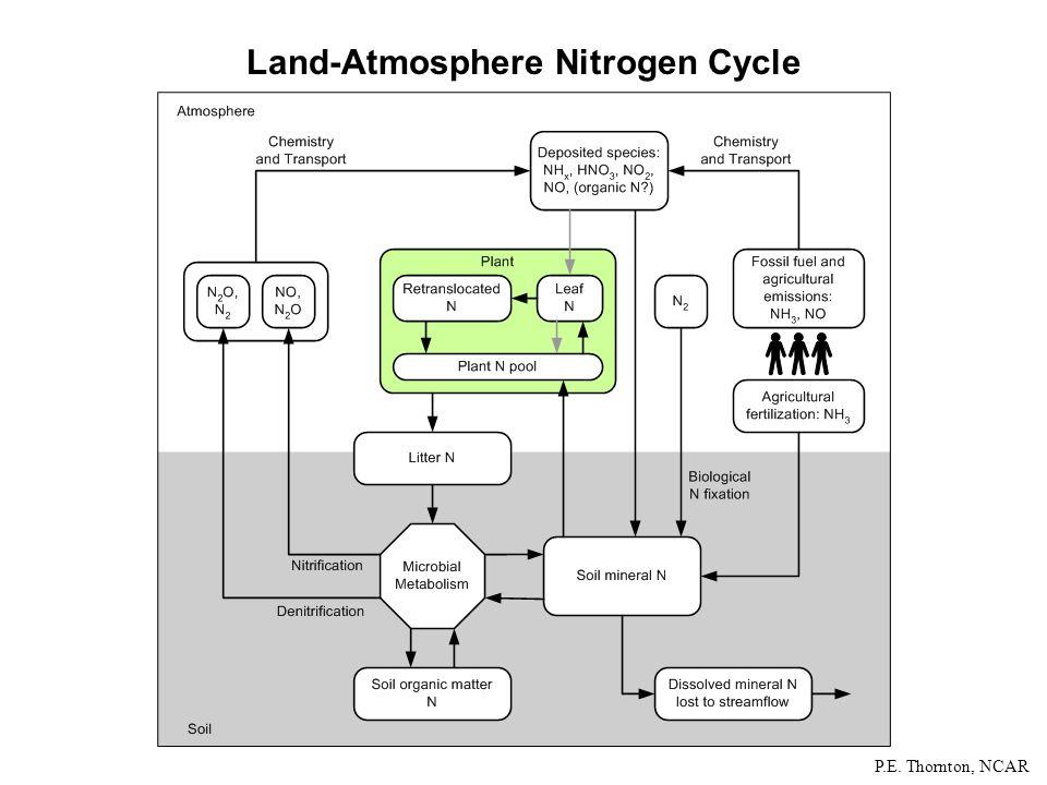 Land-Atmosphere Nitrogen Cycle P.E. Thornton, NCAR
