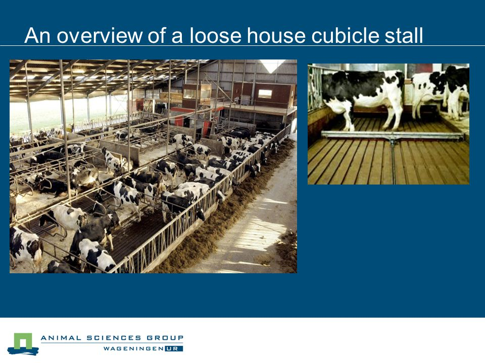 An overview of a loose house cubicle stall