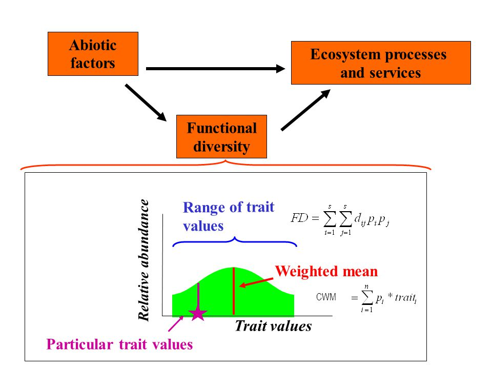 Abiotic factors Ecosystem processes and services Functional diversity Range of trait values Trait values Relative abundance Weighted mean Particular t