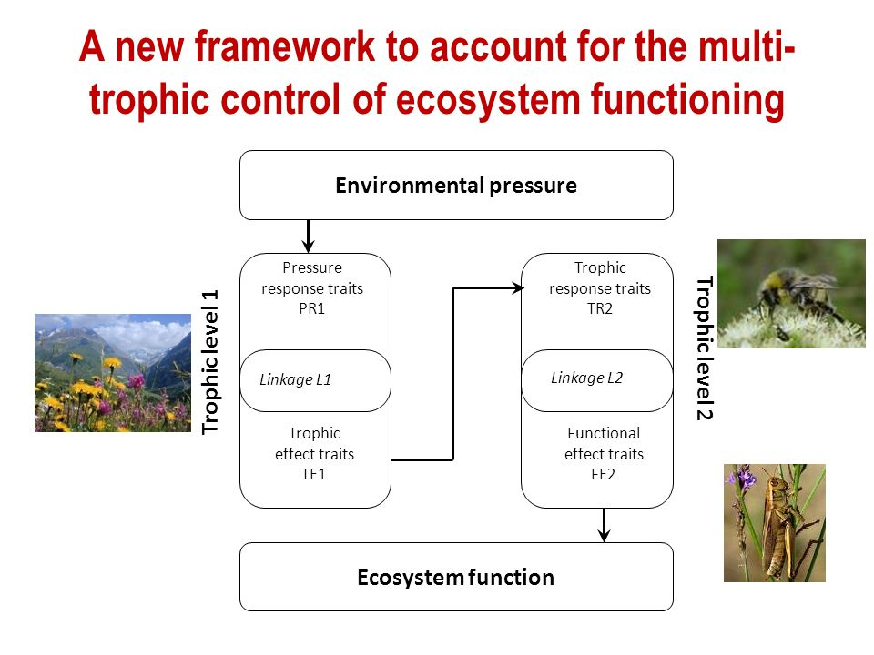 A new framework to account for the multi- trophic control of ecosystem functioning Environmental pressure Pressure response traits PR1 Trophic effect