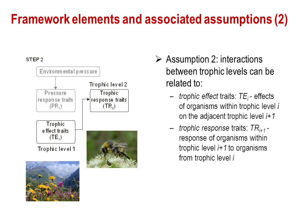 Framework elements and associated assumptions (2)  Assumption 2: interactions between trophic levels can be related to: – trophic effect traits: TE i