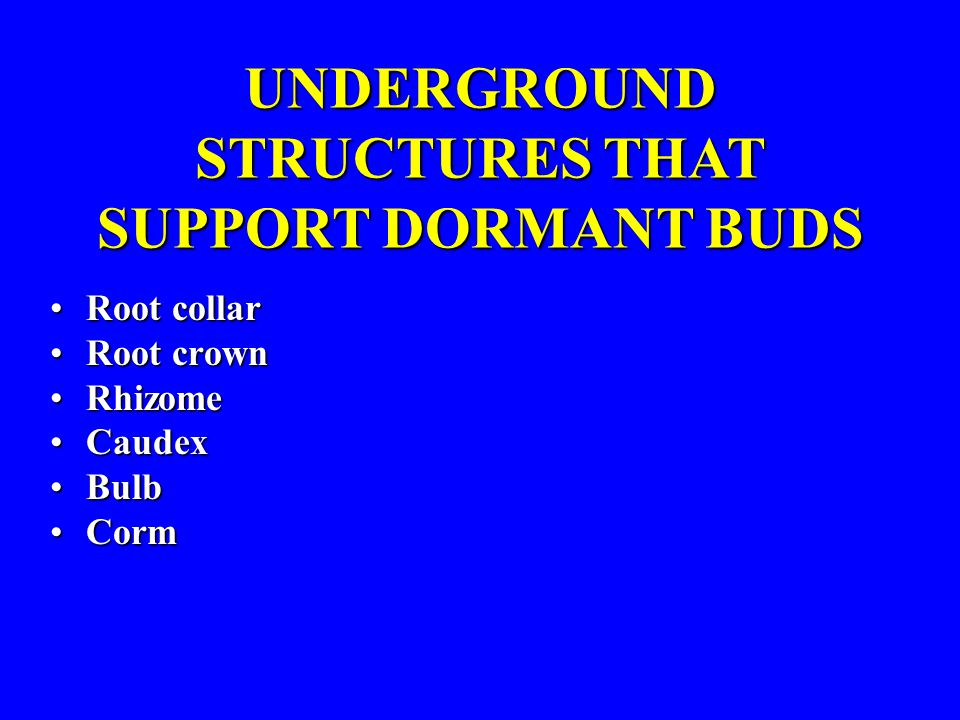 Root collarRoot collar Root crownRoot crown RhizomeRhizome CaudexCaudex BulbBulb CormCorm UNDERGROUND STRUCTURES THAT SUPPORT DORMANT BUDS