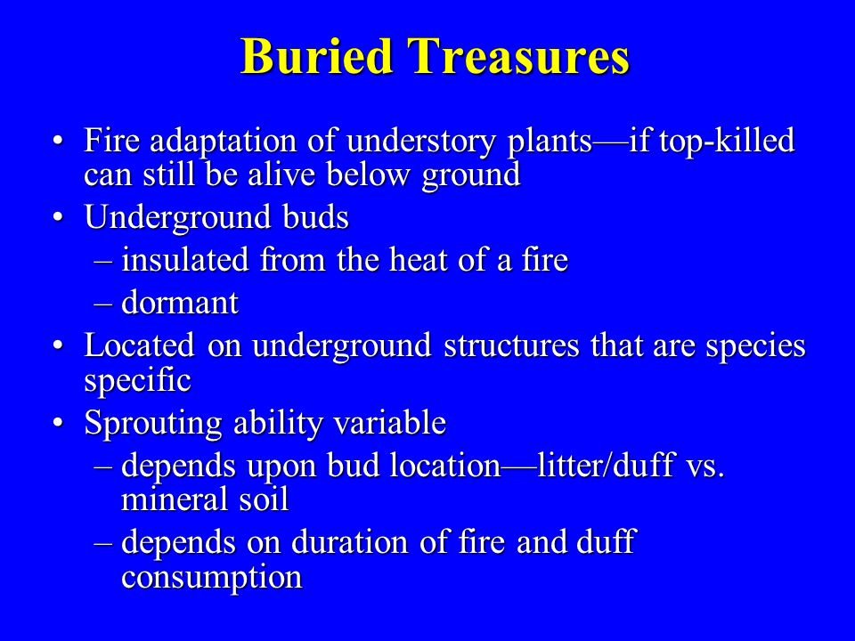 Buried Treasures Fire adaptation of understory plants—if top-killed can still be alive below groundFire adaptation of understory plants—if top-killed can still be alive below ground Underground budsUnderground buds –insulated from the heat of a fire –dormant Located on underground structures that are species specificLocated on underground structures that are species specific Sprouting ability variableSprouting ability variable –depends upon bud location—litter/duff vs.