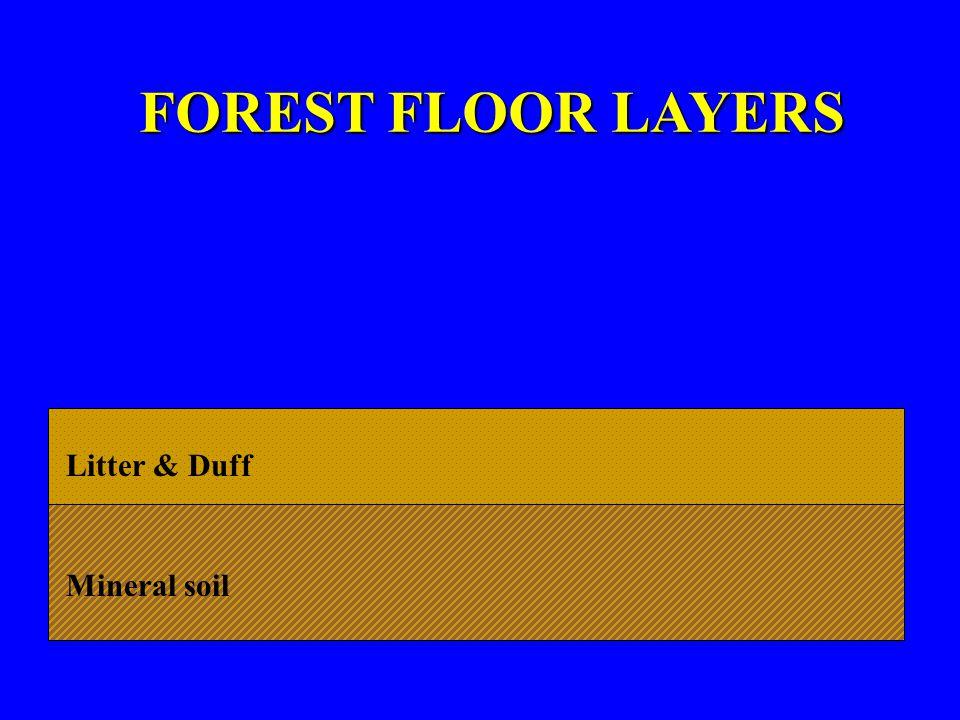 Litter & Duff Mineral soil BULB/CORM