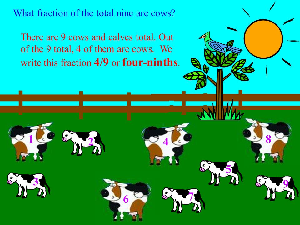 We can move the calves and cows to look like the fraction 5/9. 1 2 3 4 5 6 7 8 9 numerator denominator 5 9 = 2 3 579