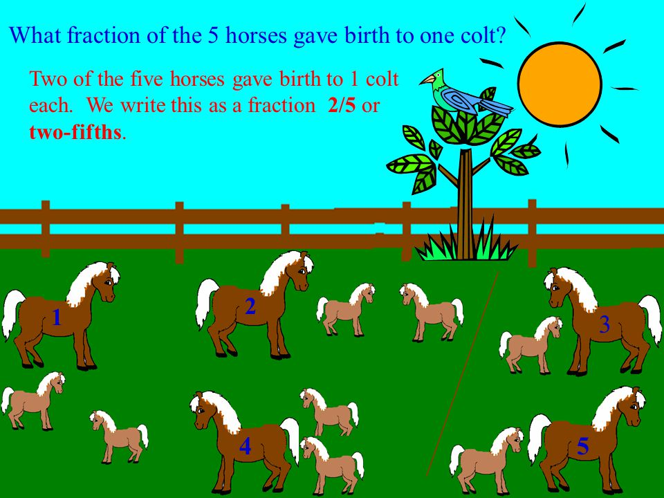 What fraction of the 5 horses gave birth to two colts? 1 2 3 45 Three of the five horses gave birth to 2 colts each. We write this as a fraction 3/5 o