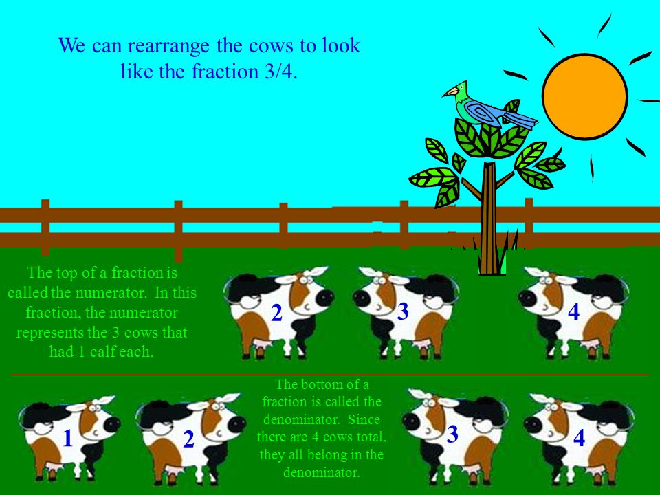 What fraction of the four cows gave birth to 1 calf? 1 2 3 4 5 1 2 3 4 There are 4 cows total, 3 of the four cows gave birth to 1 calf. We can write t