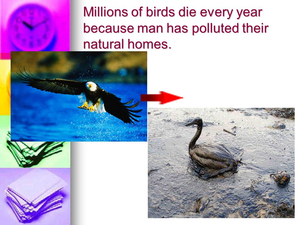 Millions of birds die every year because man has polluted their natural homes.