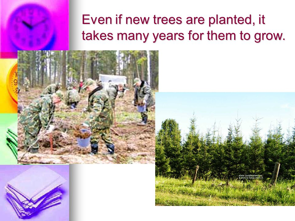 Even if new trees are planted, it takes many years for them to grow.