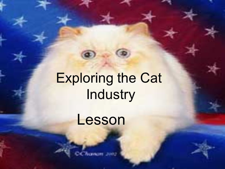 How do I train and groom my cat.Litter Box Training Buy a litter box and some litter.