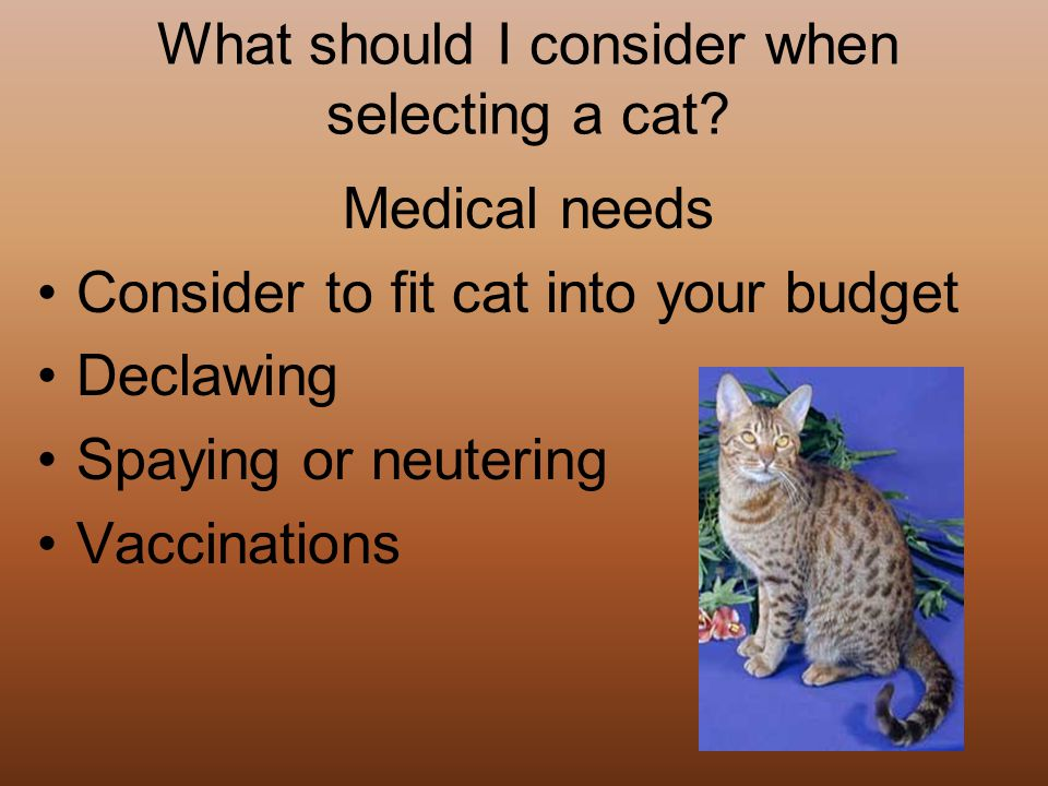 What should I consider when selecting a cat.