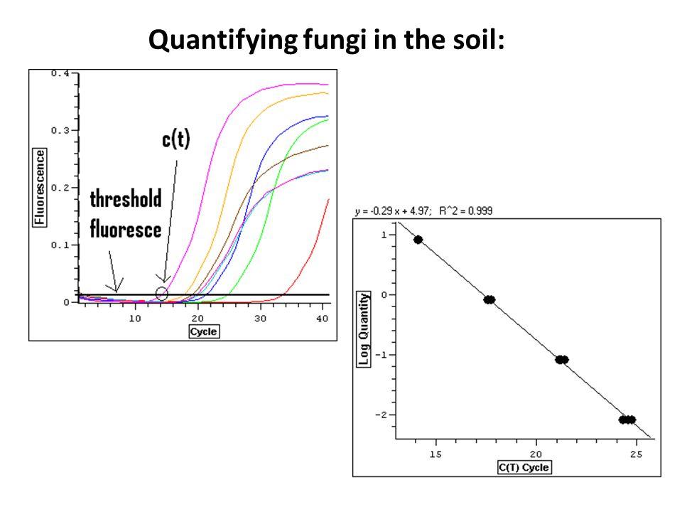 Quantifying fungi in the soil:
