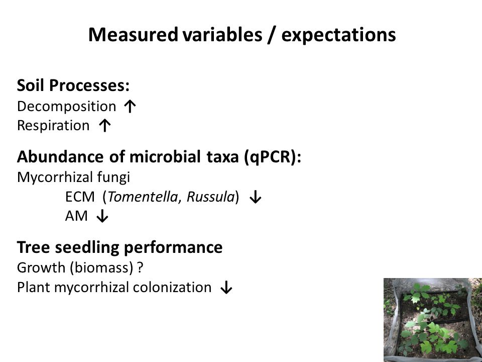 Soil Processes: Decomposition ↑ Respiration ↑ Abundance of microbial taxa (qPCR): Mycorrhizal fungi ECM (Tomentella, Russula) ↓ AM ↓ Tree seedling per