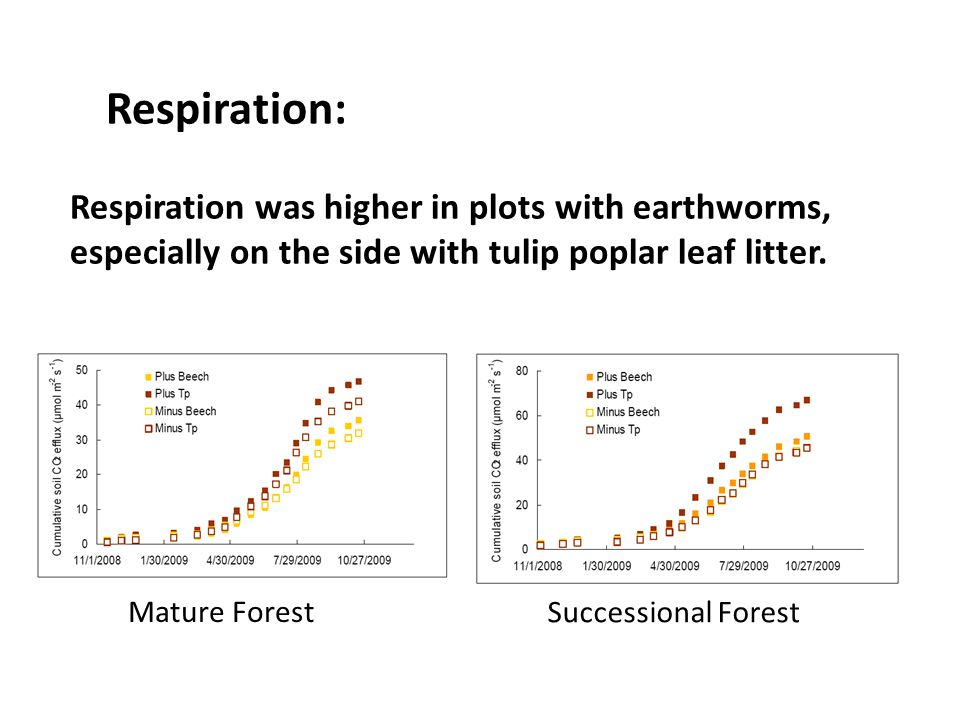 Respiration was higher in plots with earthworms, especially on the side with tulip poplar leaf litter. Mature Forest Successional Forest Respiration: