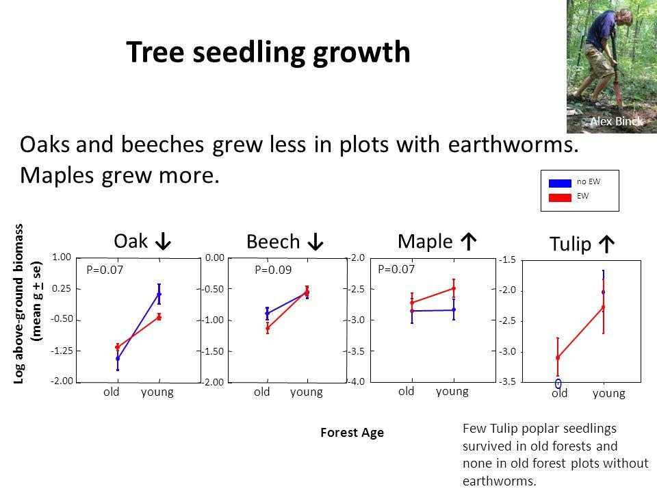 Oak ↓ Beech ↓ Log above-ground biomass (mean g + se) Forest Age oldyoung -2.00 -1.25 -0.50 0.25 1.00 no EW EW oldyoung -2.00 -1.50 -0.50 0.00 P=0.07 P