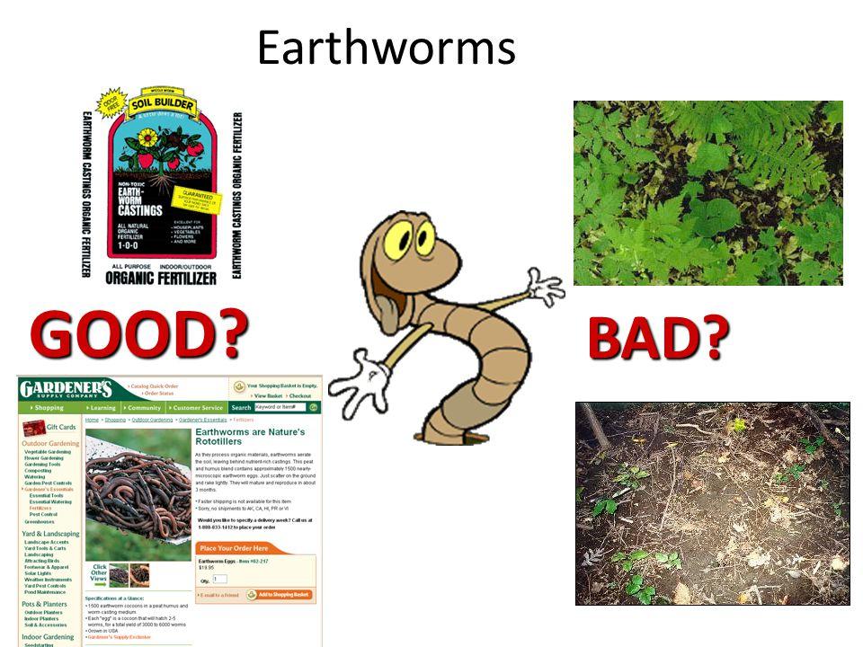 Earthworms BAD? GOOD?
