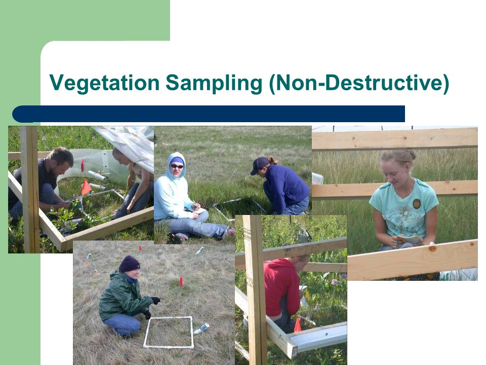 Vegetation Sampling (Non-Destructive)