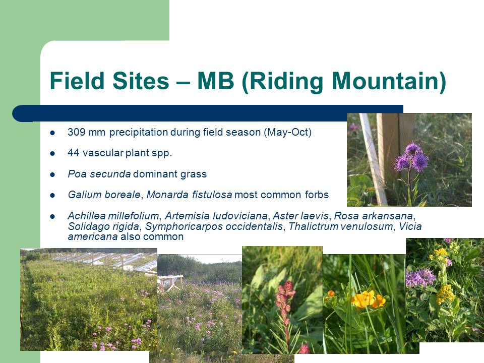 Field Sites – MB (Riding Mountain) 309 mm precipitation during field season (May-Oct) 44 vascular plant spp.