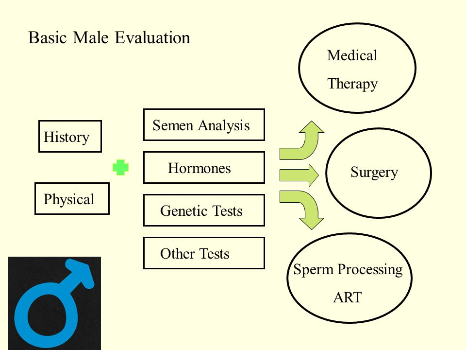 History Basic Male Evaluation Physical Medical Therapy Surgery Sperm Processing ART Semen Analysis Hormones Genetic Tests Other Tests