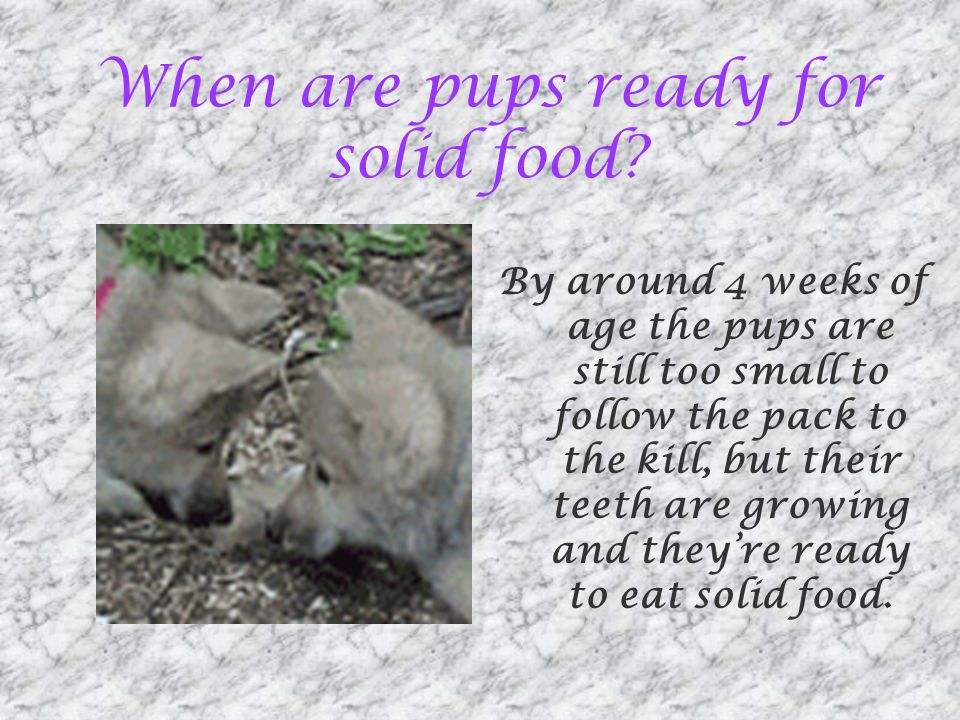 When are pups ready for solid food.