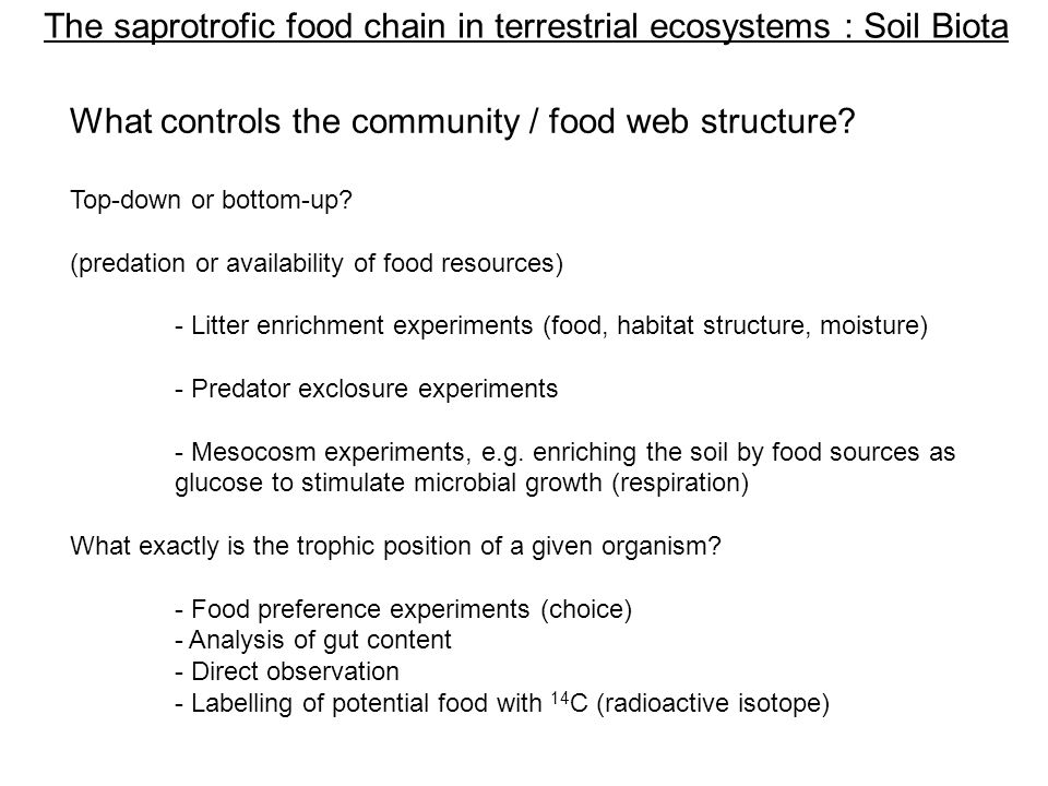 The saprotrofic food chain in terrestrial ecosystems : Soil Biota What controls the community / food web structure.