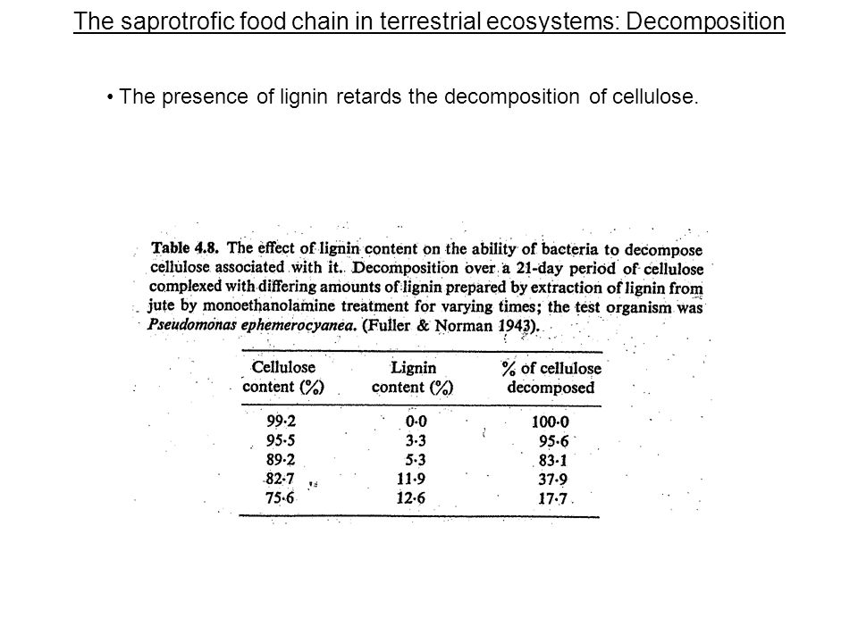 The saprotrofic food chain in terrestrial ecosystems: Decomposition The presence of lignin retards the decomposition of cellulose.