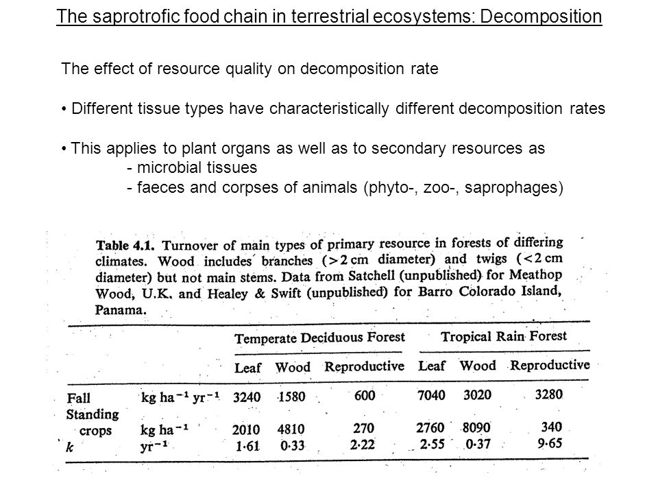 The saprotrofic food chain in terrestrial ecosystems: Decomposition The effect of resource quality on decomposition rate Different tissue types have characteristically different decomposition rates This applies to plant organs as well as to secondary resources as - microbial tissues - faeces and corpses of animals (phyto-, zoo-, saprophages)