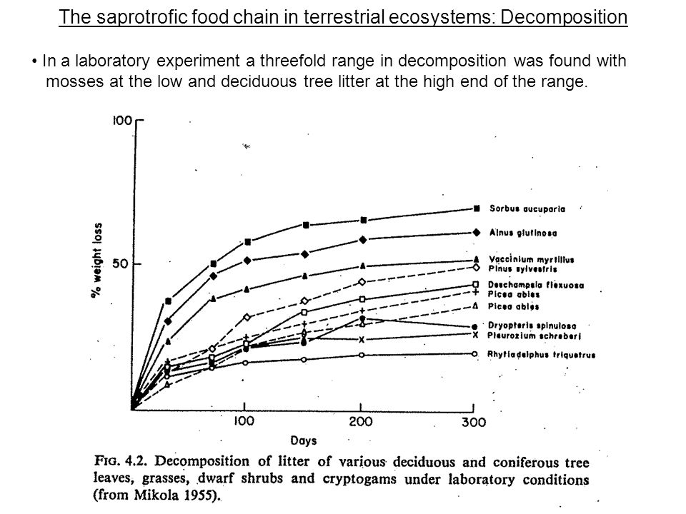 The saprotrofic food chain in terrestrial ecosystems: Decomposition In a laboratory experiment a threefold range in decomposition was found with mosses at the low and deciduous tree litter at the high end of the range.