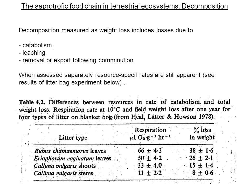 The saprotrofic food chain in terrestrial ecosystems: Decomposition Decomposition measured as weight loss includes losses due to - catabolism, - leaching, - removal or export following comminution.