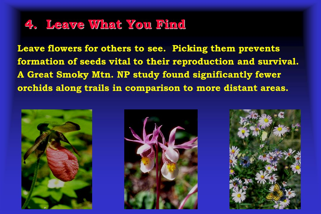 4. Leave What You Find Leave flowers for others to see.
