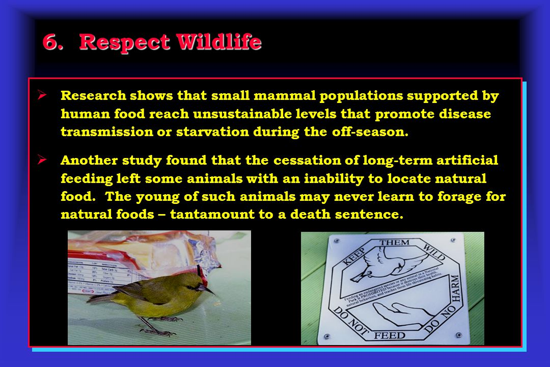 6. Respect Wildlife  Research shows that small mammal populations supported by human food reach unsustainable levels that promote disease transmissio