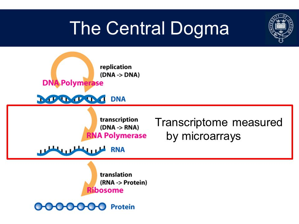 Illumina Array Metrics Average signal Number of detected genes Housekeeping genes signal Biotin controls Hybridisation controls Negative control probe signal