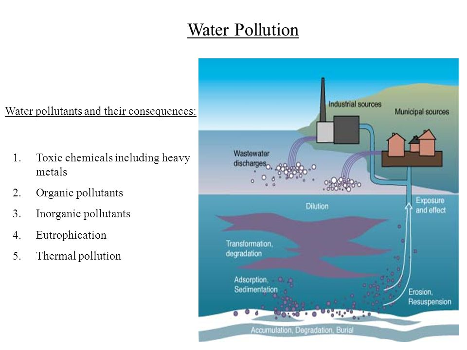 Water Pollution Water pollutants and their consequences: 1.Toxic chemicals including heavy metals 2.Organic pollutants 3.Inorganic pollutants 4.Eutrop