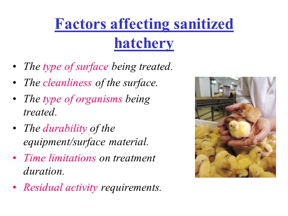 Factors affecting sanitized hatchery The type of surface being treated.