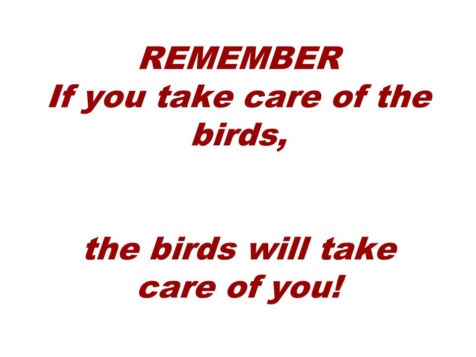 REMEMBER If you take care of the birds, the birds will take care of you!