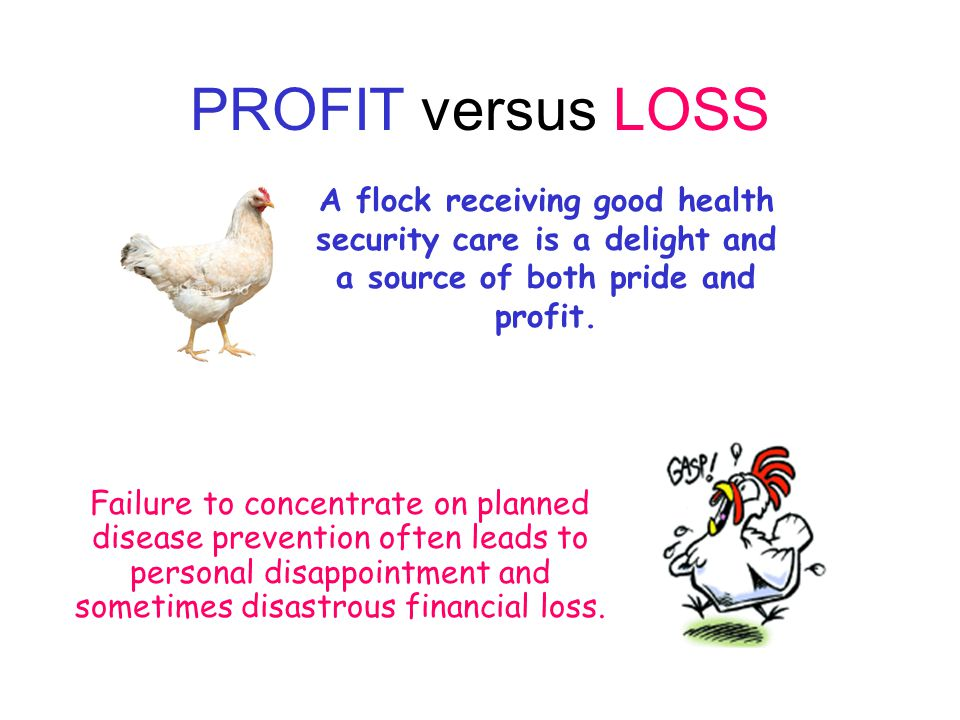 PROFIT versus LOSS A flock receiving good health security care is a delight and a source of both pride and profit.