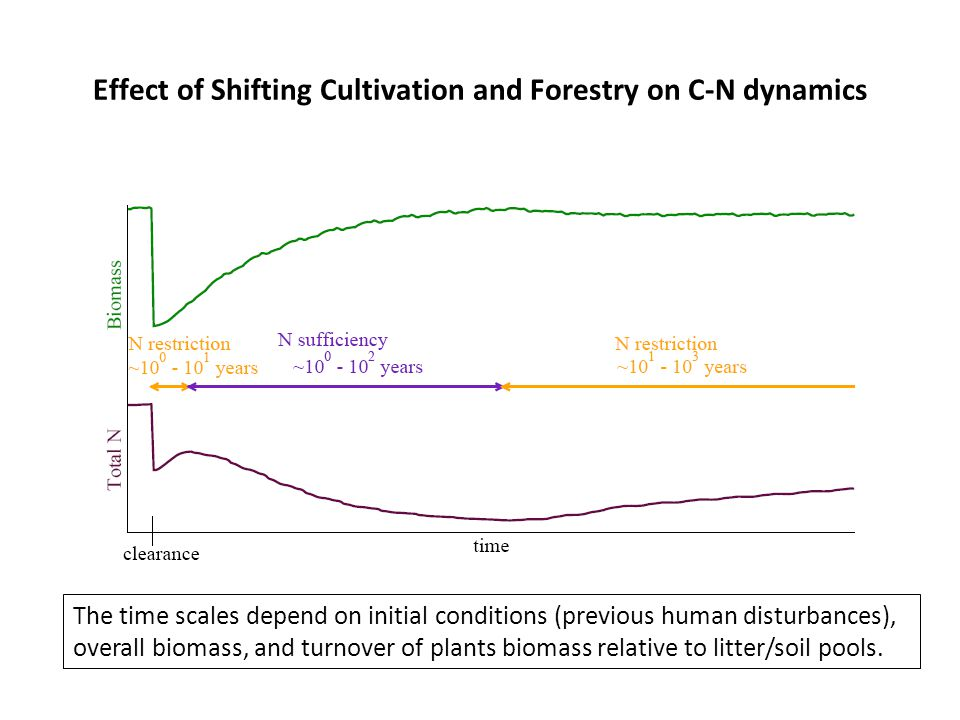 Effect of Shifting Cultivation and Forestry on C-N dynamics The time scales depend on initial conditions (previous human disturbances), overall biomass, and turnover of plants biomass relative to litter/soil pools.