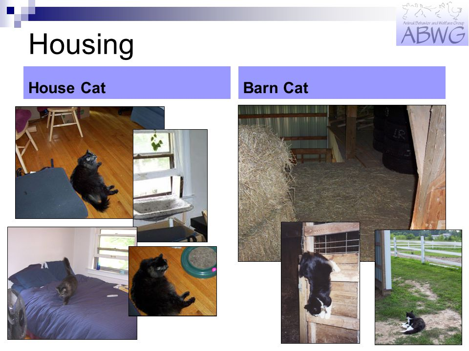Housing House CatBarn Cat