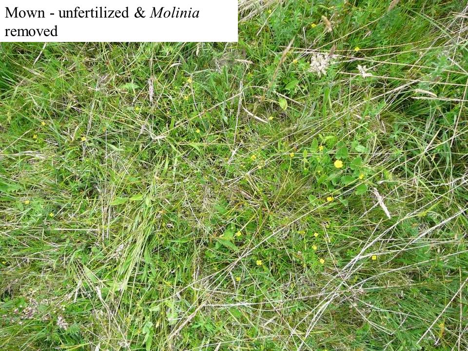 Mown - unfertilized (=traditional)