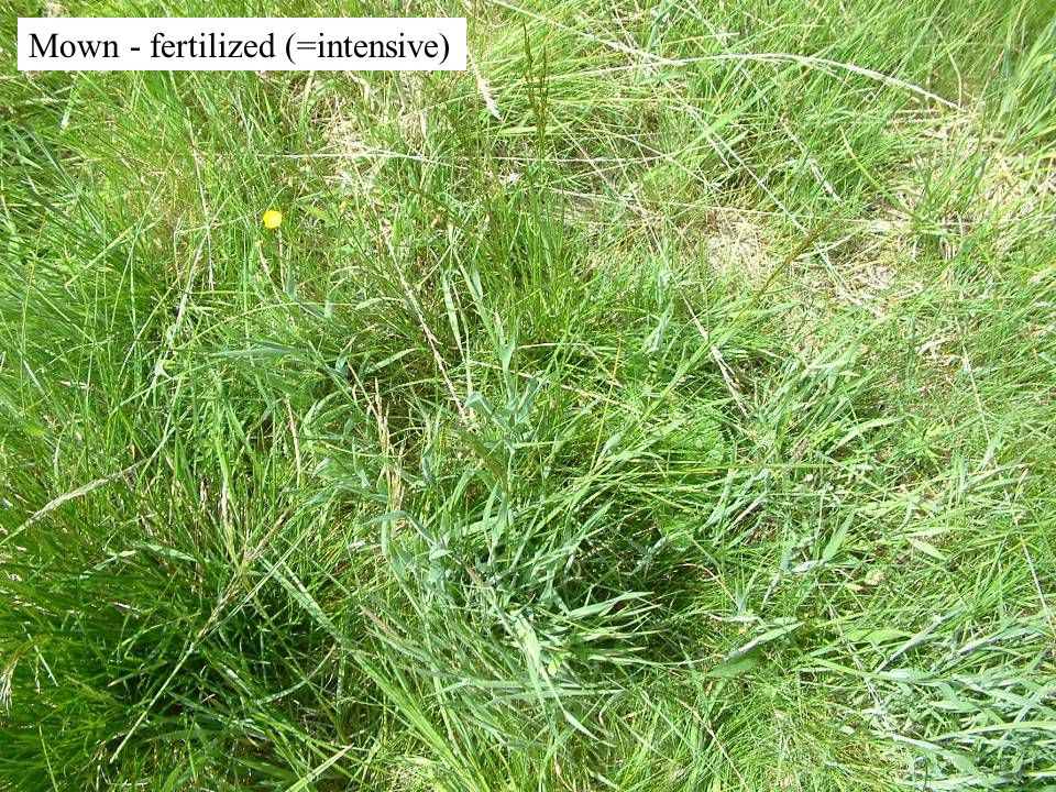 Mown - unfertilized & Molinia removed