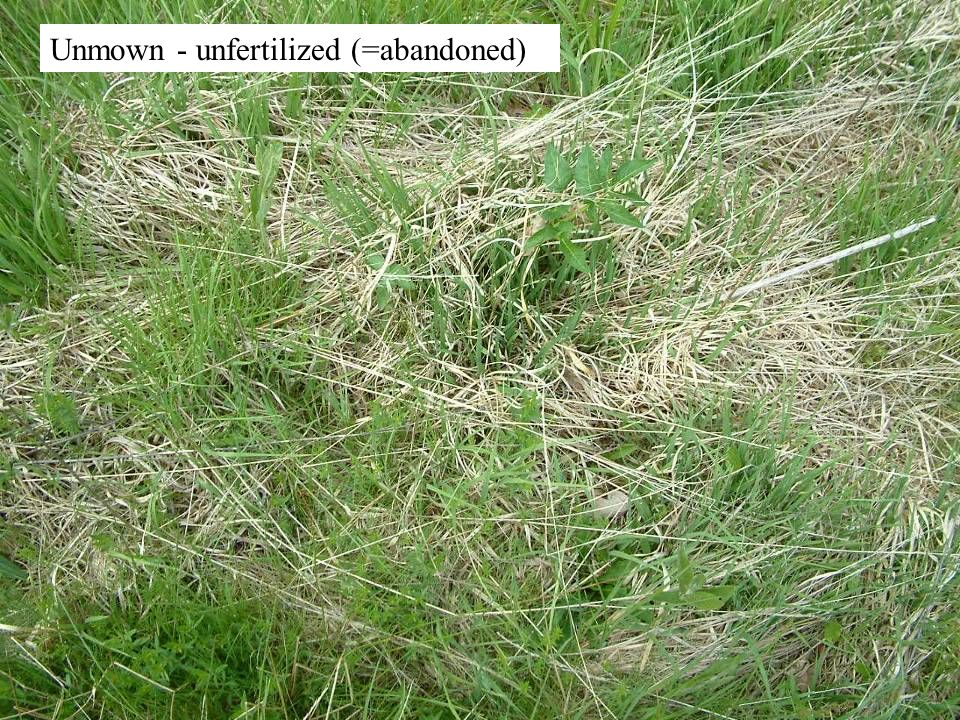 Mown - fertilized & Molinia removed