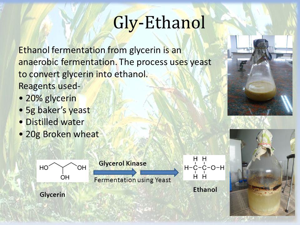 Gly-Ethanol Glycerin Glycerol Kinase Fermentation using Yeast Ethanol Ethanol fermentation from glycerin is an anaerobic fermentation.