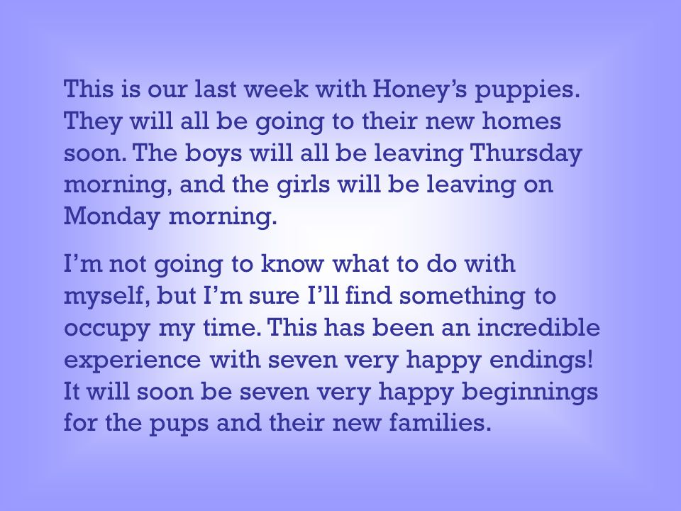 This is our last week with Honey's puppies.They will all be going to their new homes soon.