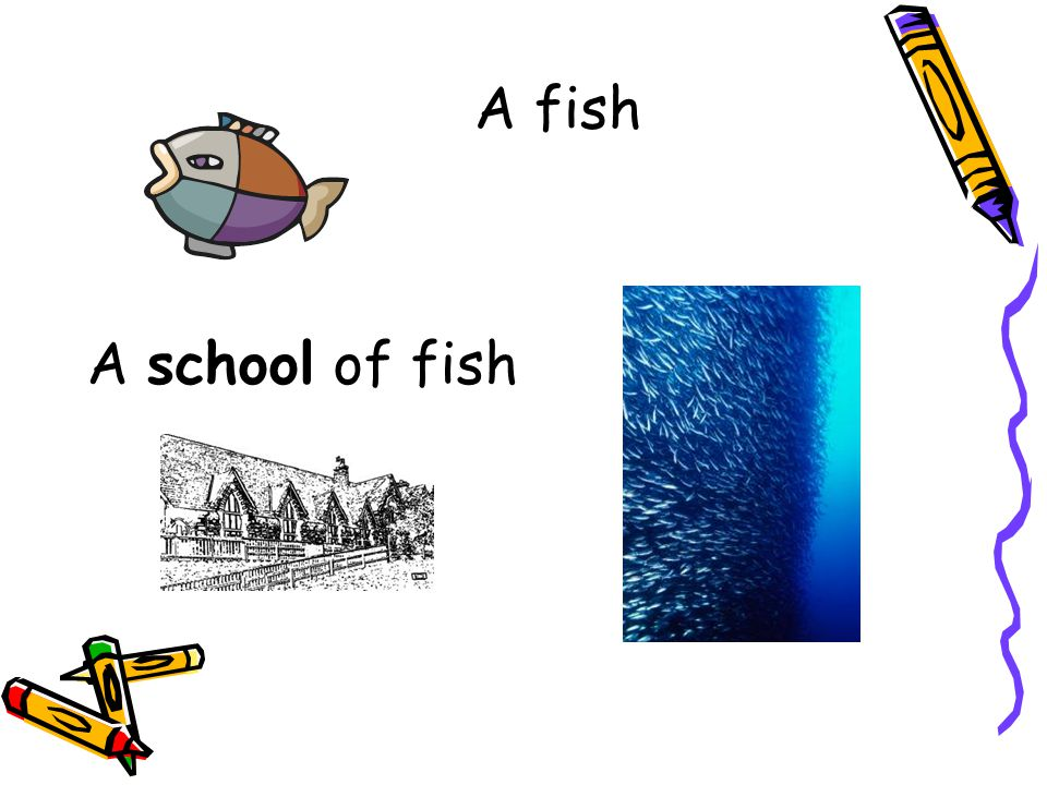 A fish A school of fish