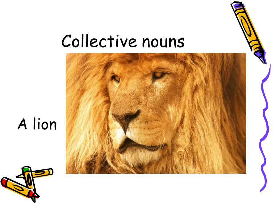 Collective nouns A lion