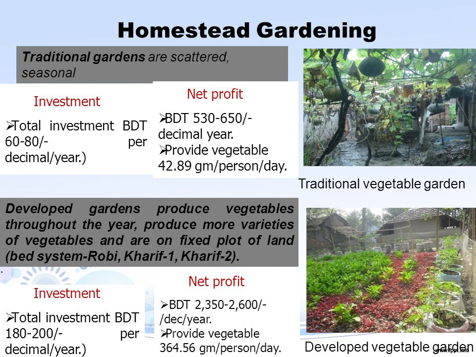 Homestead Gardening Traditional vegetable garden Traditional gardens are scattered, seasonal Developed gardens produce vegetables throughout the year, produce more varieties of vegetables and are on fixed plot of land (bed system-Robi, Kharif-1, Kharif-2).