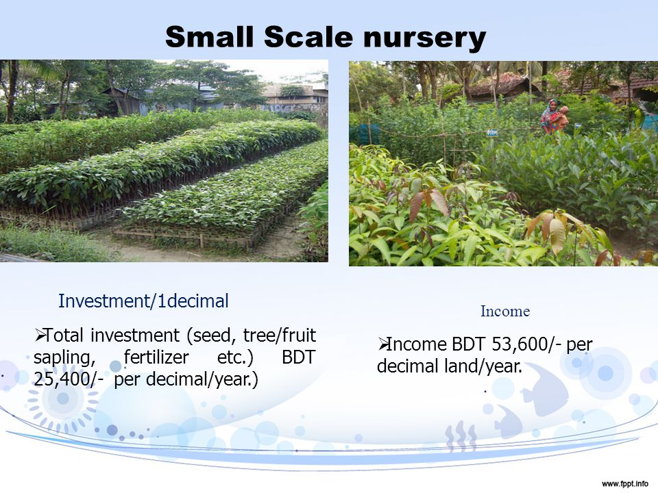 Small Scale nursery Investment/1decimal  Total investment (seed, tree/fruit sapling, fertilizer etc.) BDT 25,400/- per decimal/year.) Income  Income BDT 53,600/- per decimal land/year.