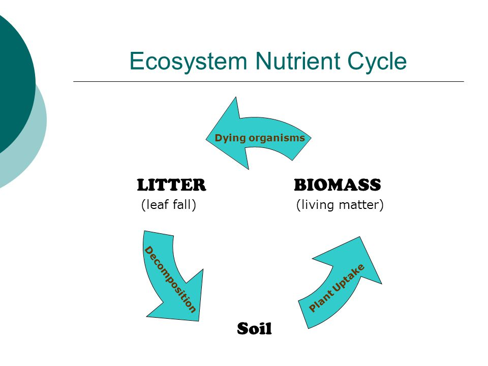 Ecosystem Nutrient Cycle Plant Uptake (living matter)(leaf fall) Decomposition Dying organisms